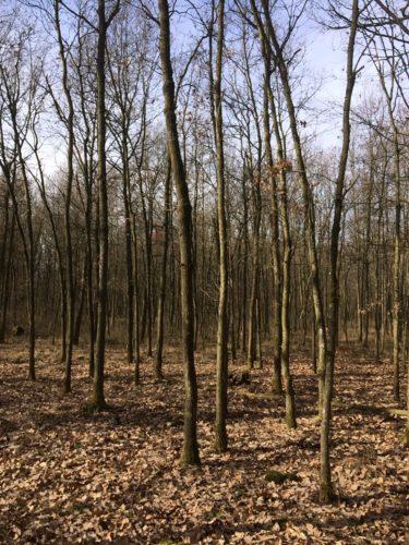 Nur Wald mit Wild ist gelebte Ökologie - Schluss mit Botschaften von Balkonbiologen und Verbalökologen - Bayerischer Jagdverband e.V.